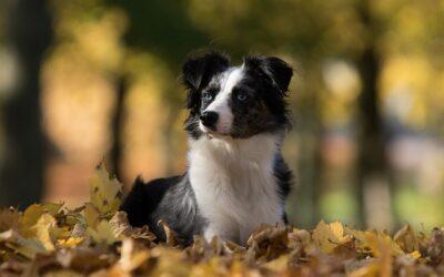 Autumn Days and Doggie Danger